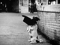 images-umberto-d-two-dog-begging